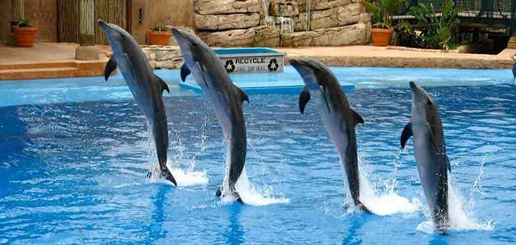 dubai dolphinarium tour