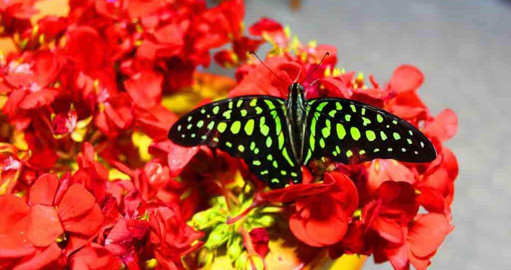 Butterfly Garden in Dubai
