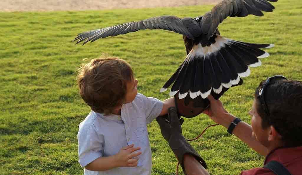 Falcon Show at Banyan Tree Al Wadi